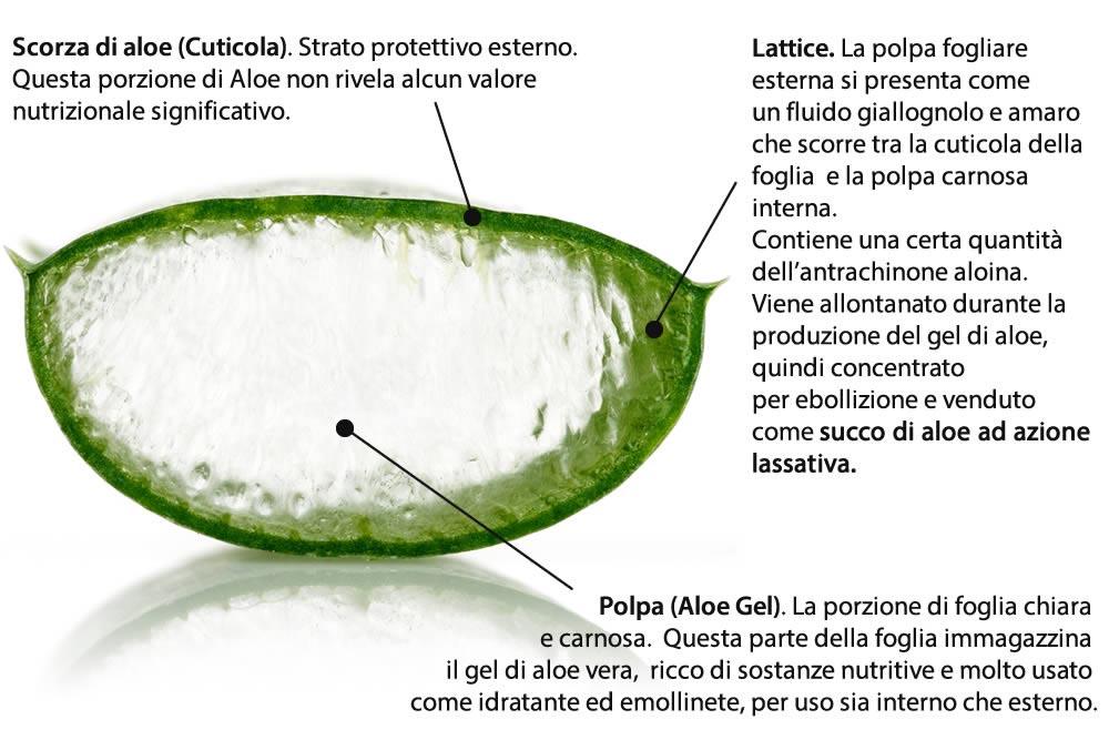 Aloe Foglia - Gel e Succo