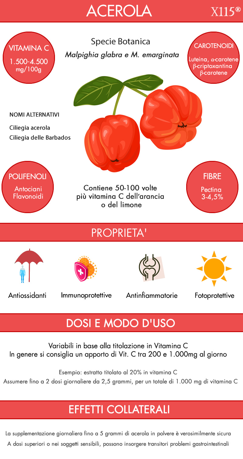 Acerola Infografica