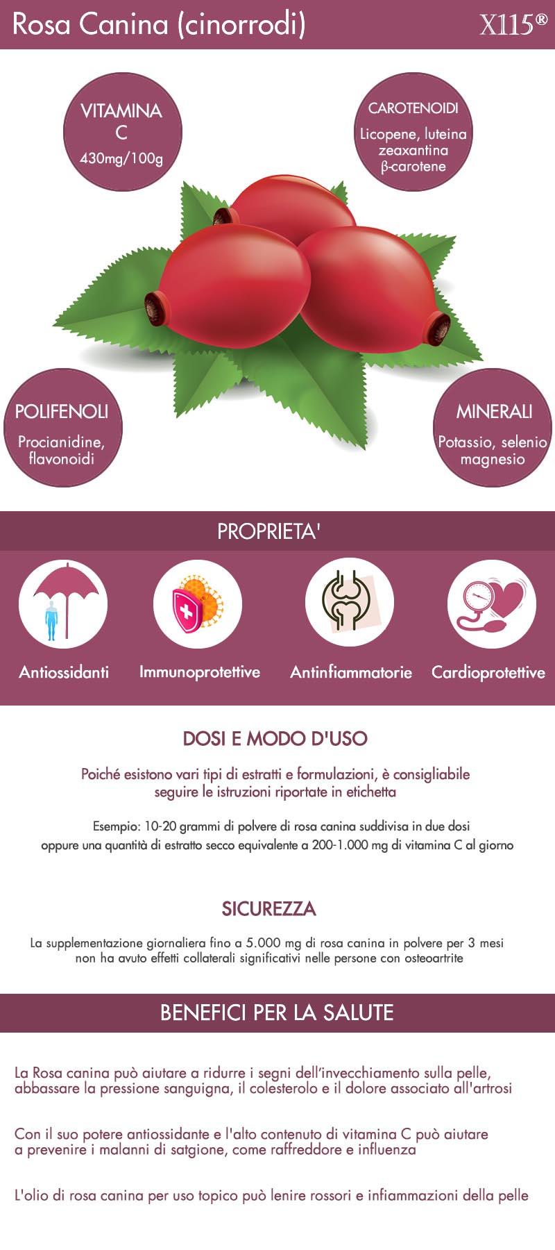 Rosa canina infografica