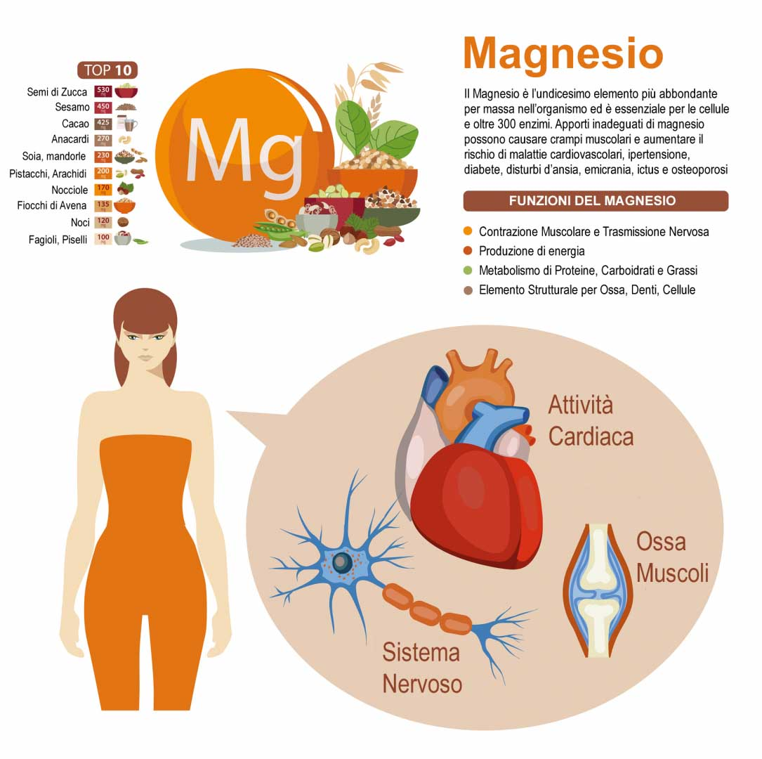 Funzioni del Magnesio