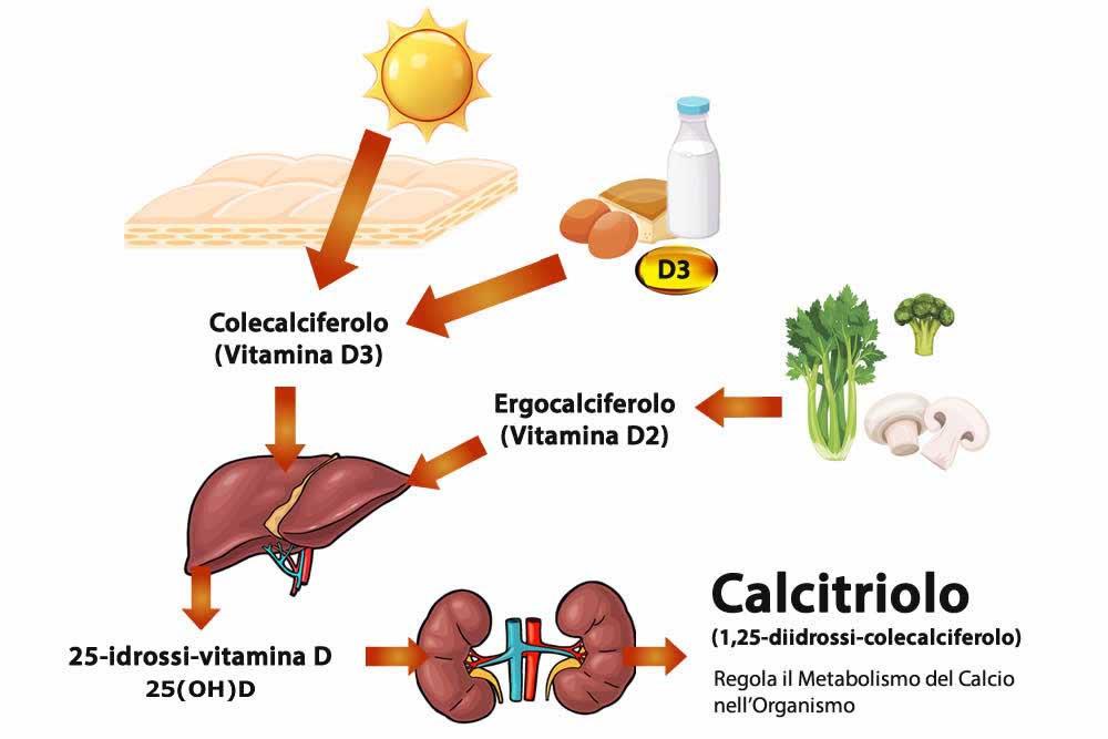 Vitamina D Metabolismo