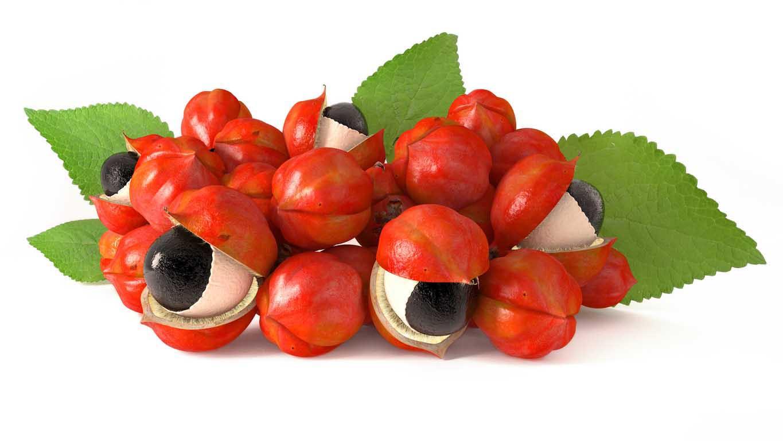 guaranà frutto e semi